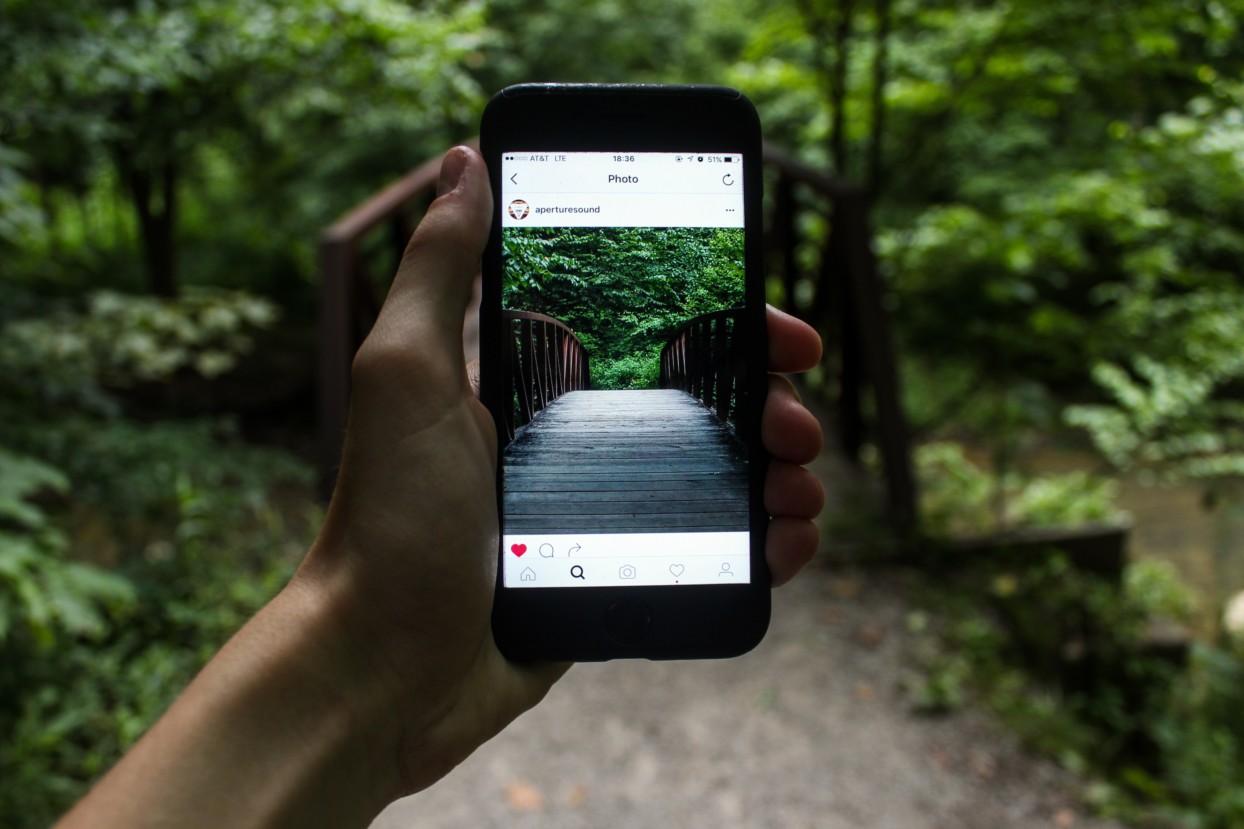 Hand holding smartphone viewing the forest